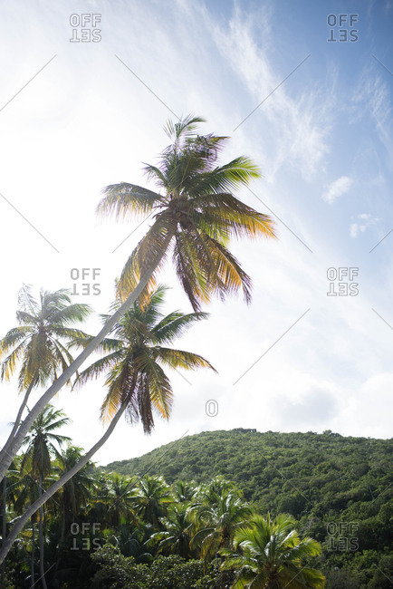 Palm trees and mountains along a tropical island