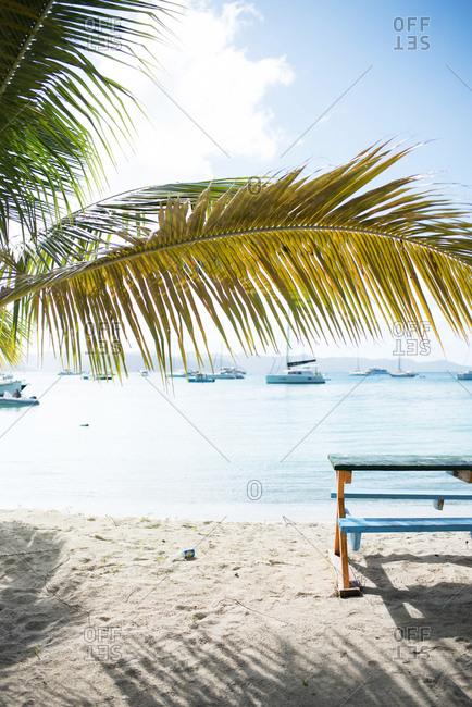 Picnic table on a beach beneath a palm tree
