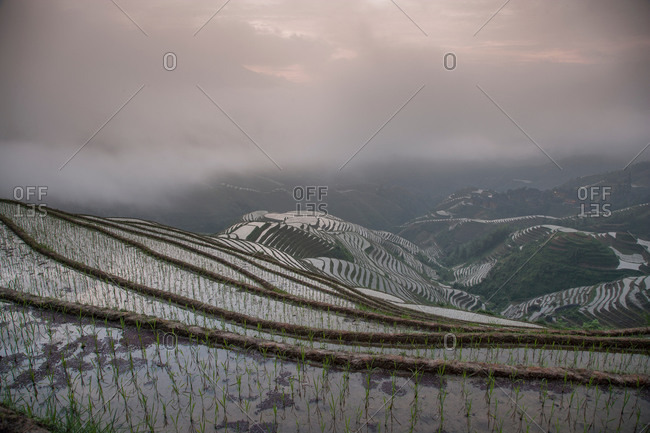 Elevated view of paddy fields at Longsheng terraced rice fields, Guangxi Zhuang, China