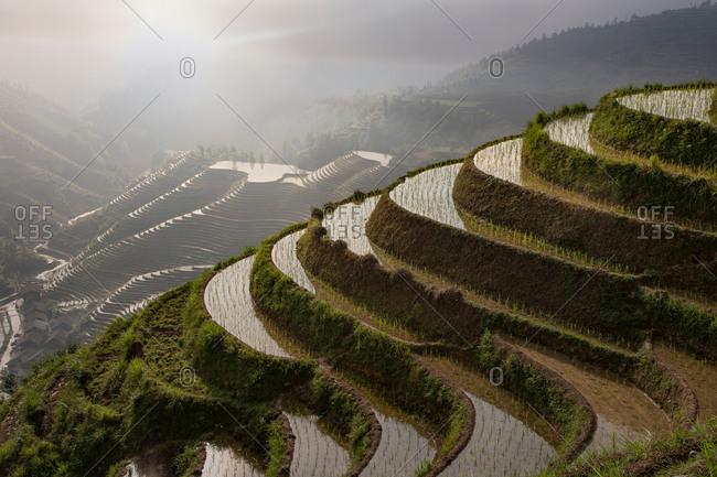 Paddy fields at Longsheng terraced rice fields, Guangxi Zhuang, China
