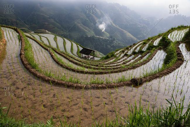 High angle view of paddy fields at Longsheng terraced rice fields, Guangxi Zhuang, China