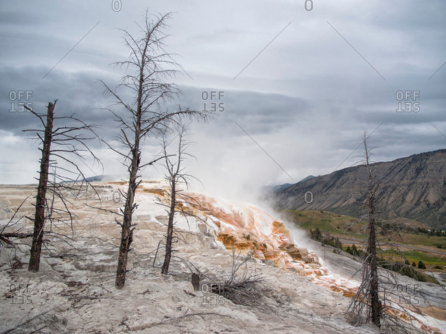 Mammoth hot springs and terraces of calcium carbon deposit, Yellowstone National Park, Wyoming, USA