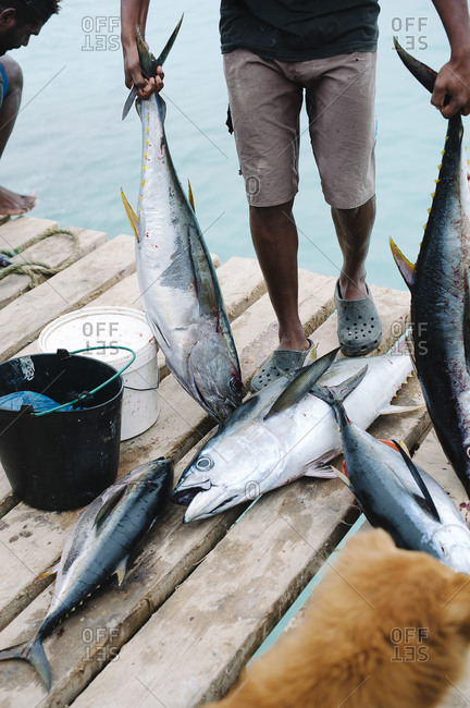 Fisherman with fresh fish, Cape Verde