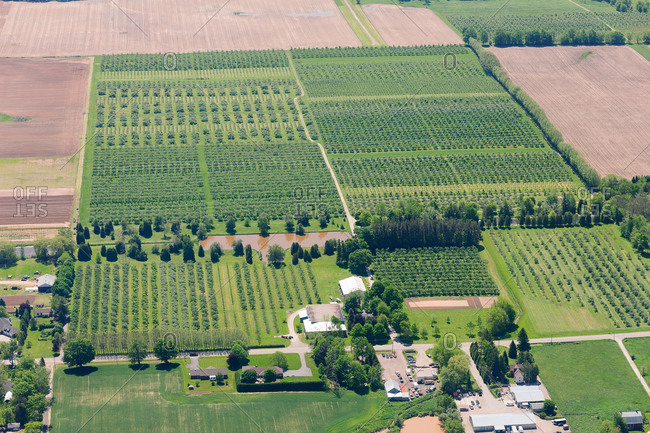Aerial view of orchards in farmland