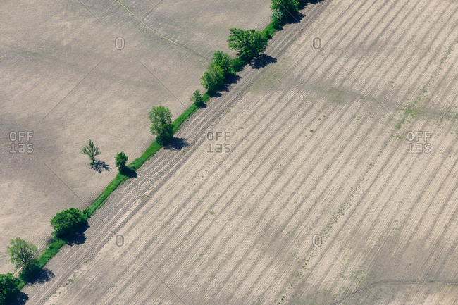 Aerial view of row of trees dividing farm fields