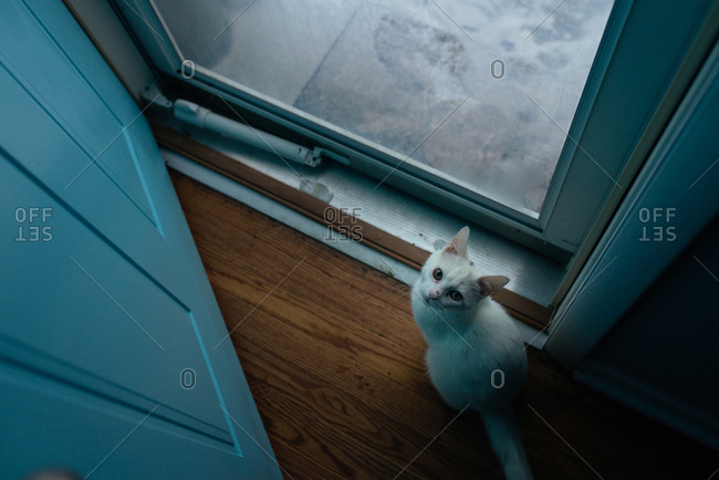Cat looking up while sitting next to the window of a storm door