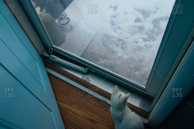 Cat looking out the window of a storm door