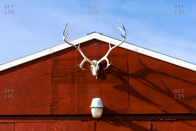 A rack of Barren-ground Caribou antlers on the facade of a red garage in an arctic village