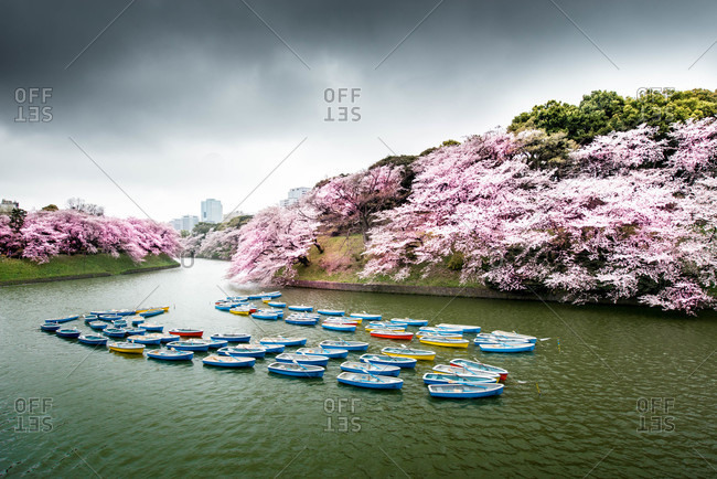 A scenic view of blossoms beside a waterway