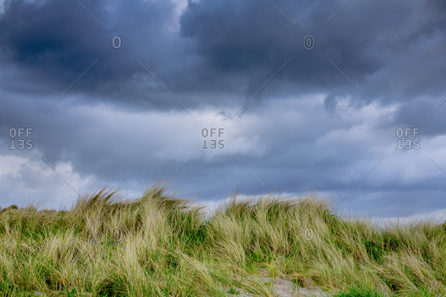 Sand dunes at Tyrella Beach, on Irish Sea