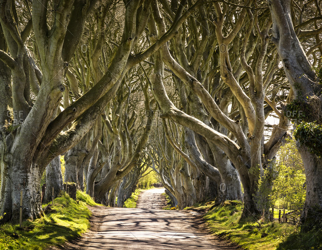 Game of Thrones Location of the Dark Hedges in Northern Ireland