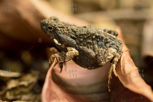 Close-up of a small toad in a botanical garden in Golfo Dulce, Puntarenas, Costa Rica