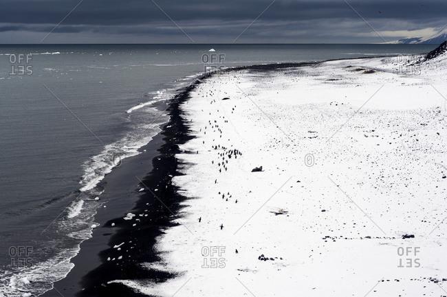 Adeleie Penguins resting on a snow-covered black volcanic beach
