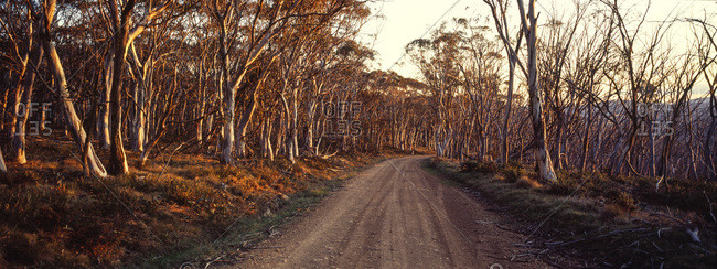 A dirt road passes through a Snow Gum woodland turning shades of pastel at sunset
