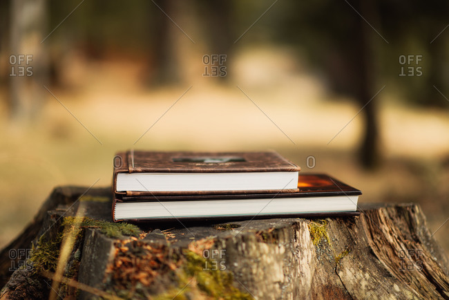 Two books stacked on a tree stump