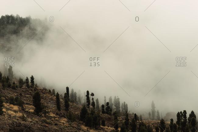 Mist along a wooded hillside in Tenerife, Spain