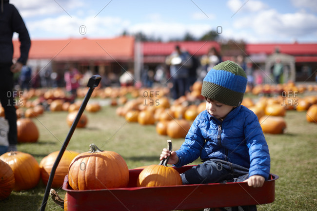 Child in wagon with pumpkins
