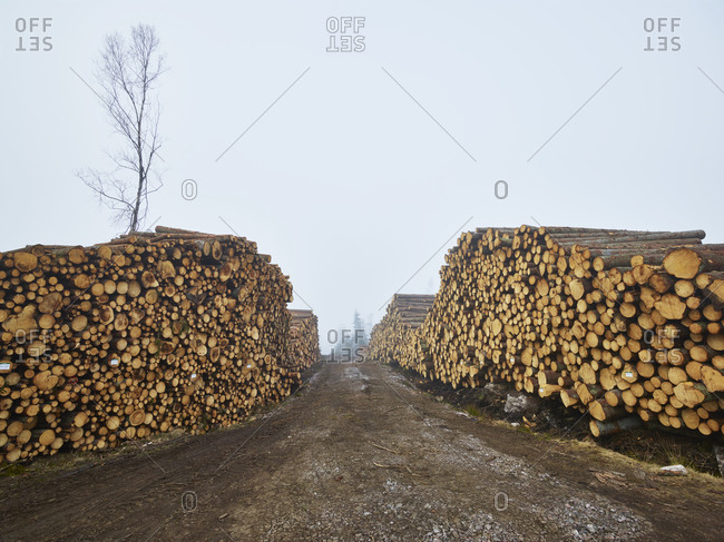 Piles of logs along dirt track