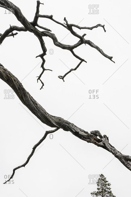 Twisted branch against sky