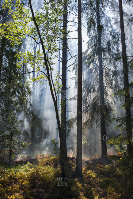Fog and sunlight in forest