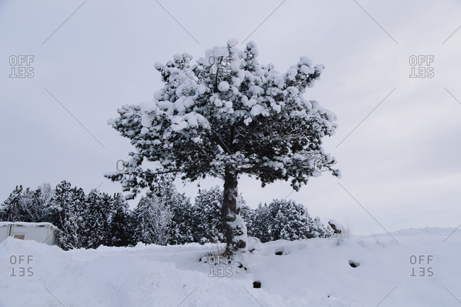Snow-covered tree on a hill