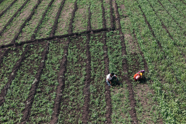 Overhead view of Indian farmers working in a field