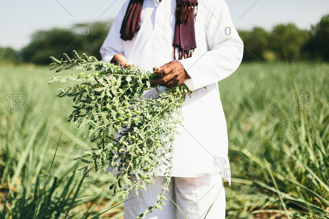 Close-up of a farmer standing in a field in India