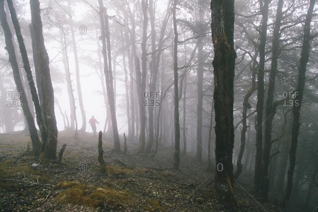 Man walking through a foggy forest in India