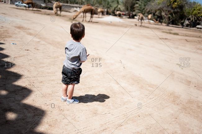 Young boy at the Janabiya Royal Camel Farm outside Manama, Bahrain