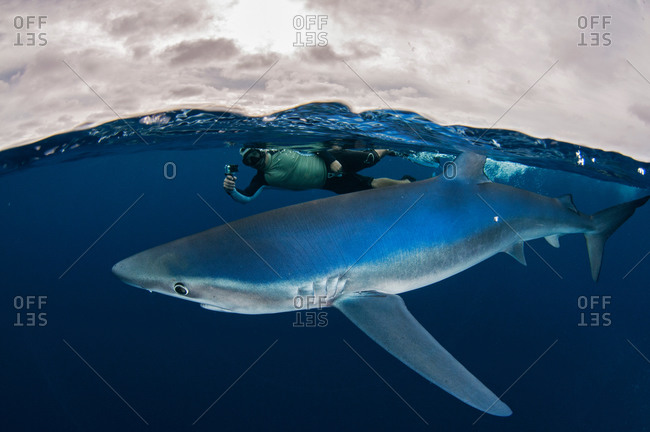 Underwater view of snorkeler holding camera swimming next to blue shark, Magdalena Bay, Baja California, Mexico