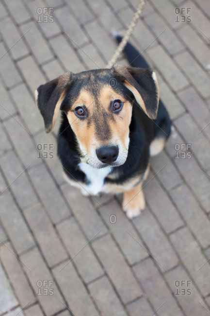 Overhead portrait of dog on sidewalk