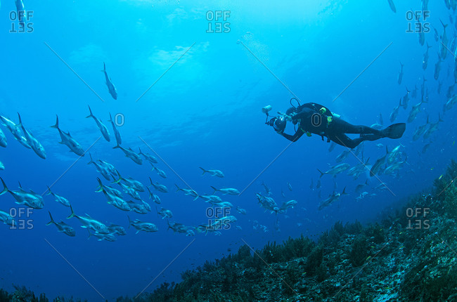 Underwater view of young male diver photographing fish near seabed, Cancun, Quintana Roo, Mexico
