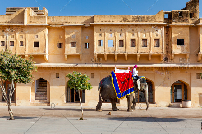Elephant at Amer Fort of Jaipur, Rajasthan