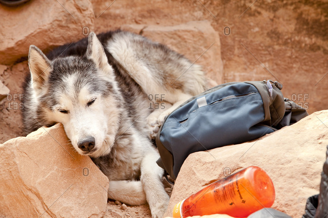 Dog resting on rock formation