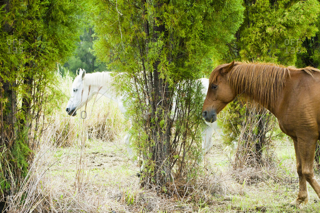 Two horses in rural Hawaii