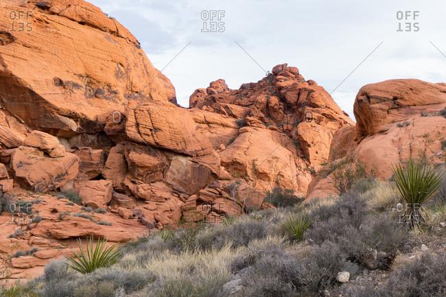 Desert vegetation below sandstone cliff at Red Rock Canyon in Nevada