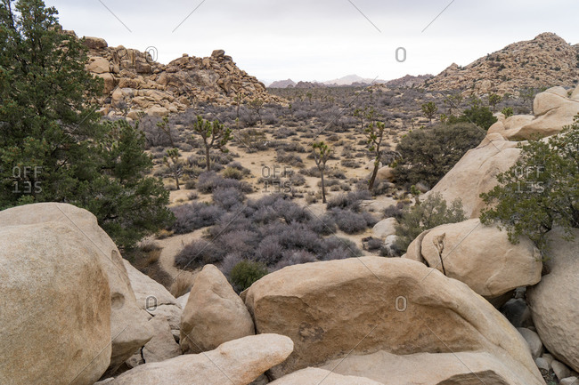 View across the desert landscape from boulders at Joshua Tree National Park