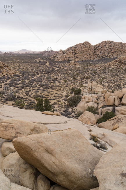 Looking out across desert landscape at Joshua Tree National Park