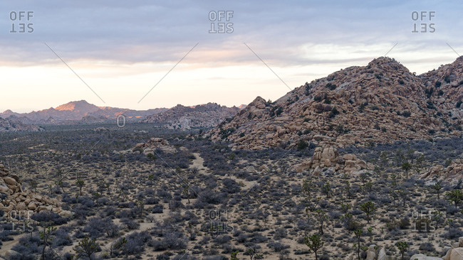 Landscape at Joshua Tree National Park at sunset