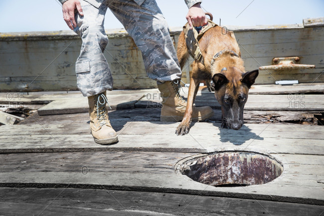 Serviceman training with his Military Working Dog