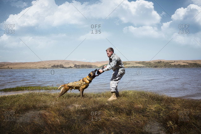 Airman doing a training exercise with his Military Service Dog