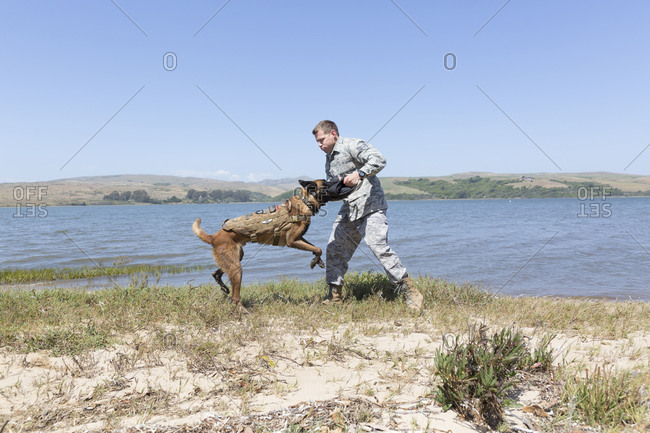 Soldier training with this Military Service Dog