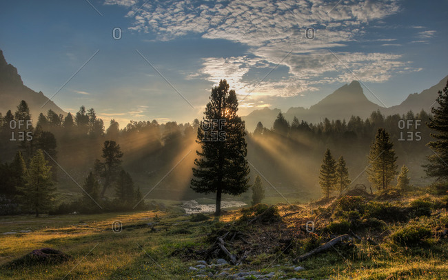 Sun beams through pine tree and fog