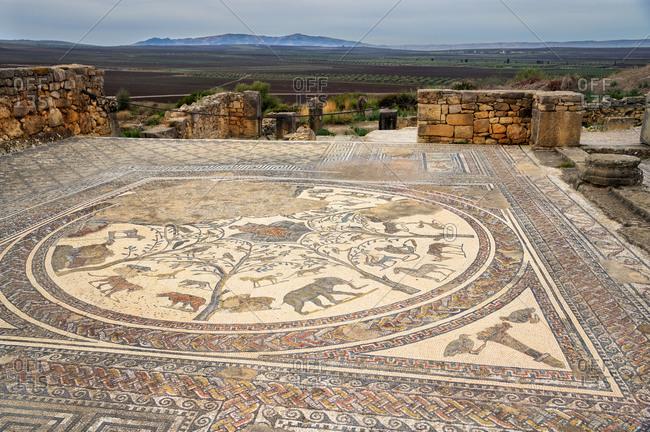 Volubilis, Morocco - December 7, 2015: Roman marble mosaic at Volubilis