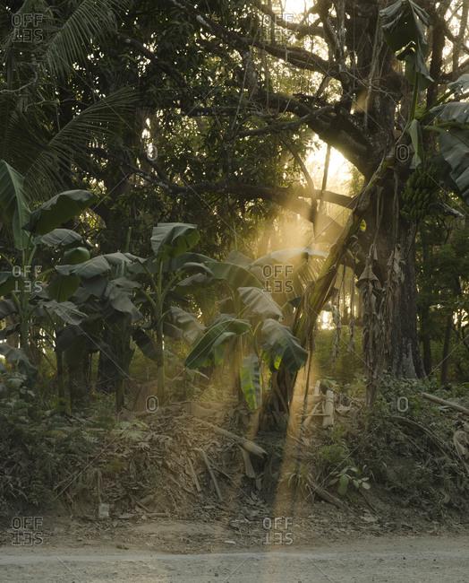 Light shining through the jungle on the side of a dirt road, Santa Teresa, Costa Rica