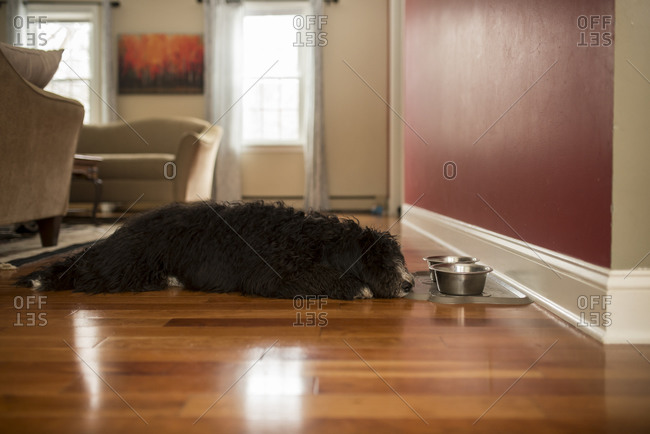 Dog lying near food bowls