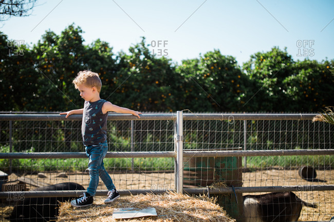 Young boy climbing on hay bale next to animal pen at farm