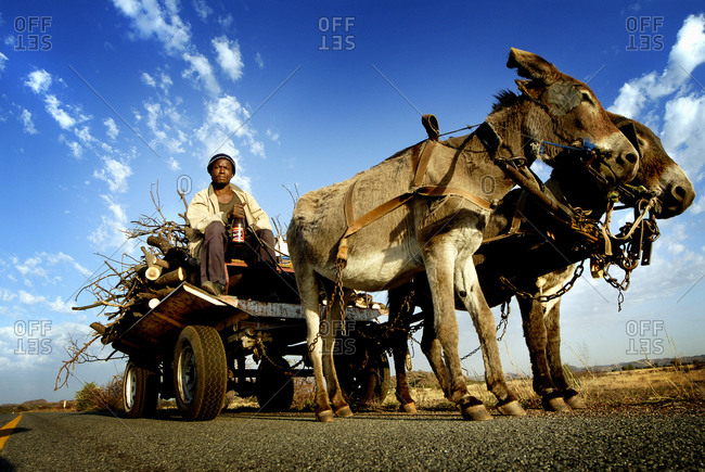 South Africa - May 20, 2007: Man on cart pulled by donkeys