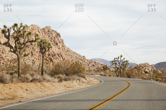 Joshua trees along roadside in California desert
