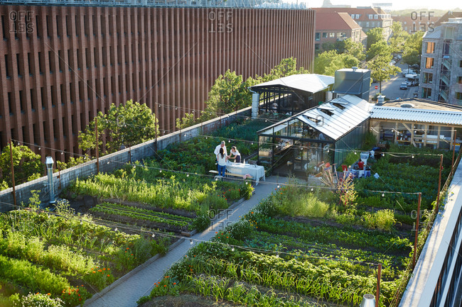 Copenhagen Denmark - July 2, 2015: Elevated view of rooftop garden in Copenhagen